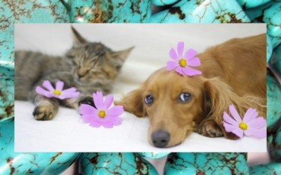 Healing Flower Essences and Crystals for Animals
