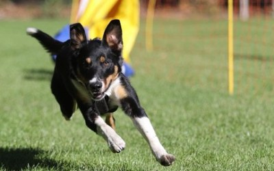 Raising your dog from pup to adult (sport) dog