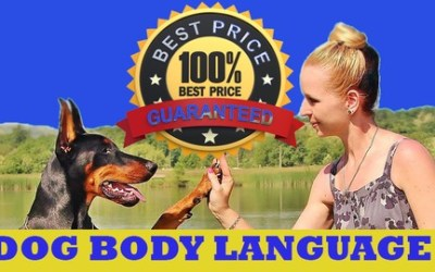 Dog body language. How To Read Your Dog's Body Language