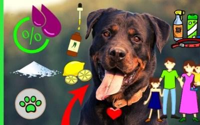 DOG Fleas & Ticks NATURAL HOME REMEDIES Prevention+Treatment