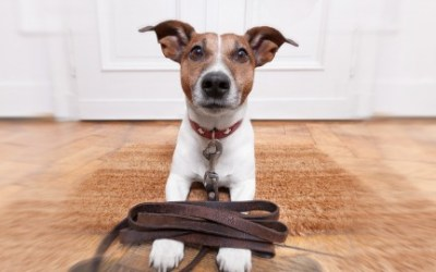 Dog Sitting for Beginners: Start Your Own Home Business