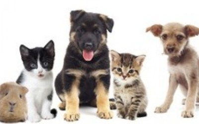 Turn Your Love And Passion for Animals Into A Career!