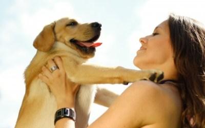 """Puppy School """"El buen inicio de tu cachorro"""""""