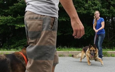 Dog Training - How to Work With Aggressive Dogs.