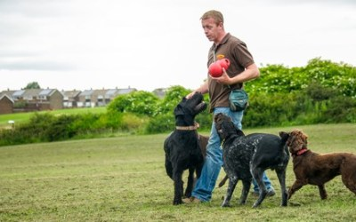Dog Training for Humans - How To Be Your Dogs Superhero