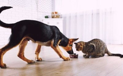 Natural Raw Food Diet For Dogs & Cats (a Training Series P1)