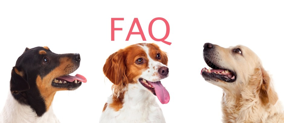 FAQ DOG BLOG