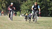 Bikejoring race - dogs with pulling on bike
