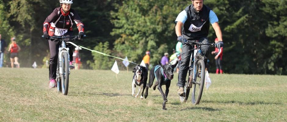 Bikejoring race - dogs with pulling on bike