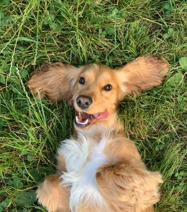 Goofy dog laying on grass