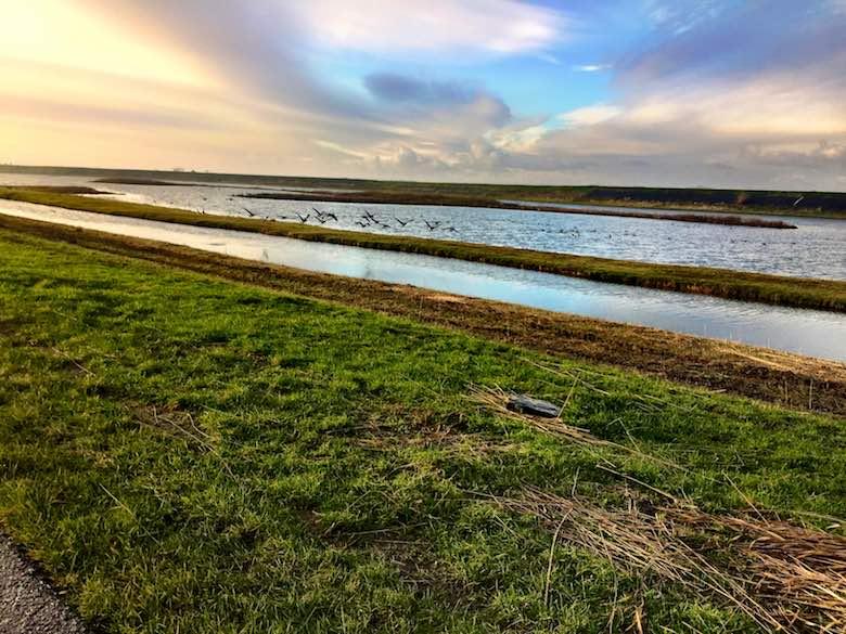 De prachtige natuur en broedplaatsen voor steltlopers aan de Wadden kust van Texel