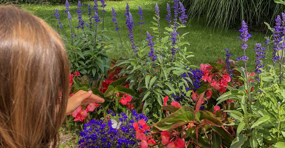 Little girl trying to catch a white butterfly on the purple and red flowers in the garden of the Waldorf Astoria Versailles