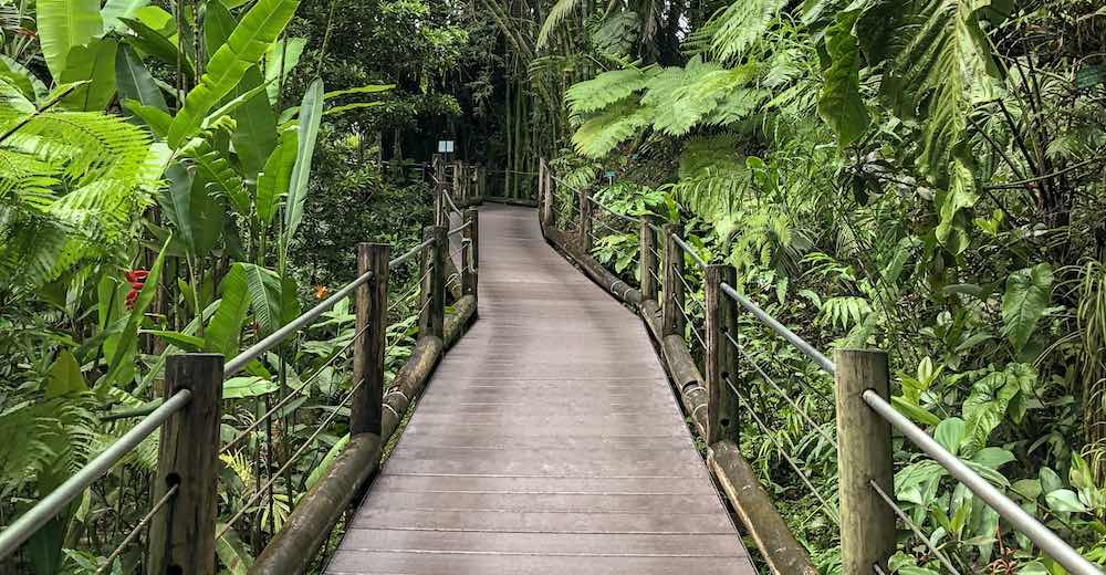 A wooden trail in between tropical plants at the Mother and two kids walking the trail at the Hilo Botanical Gardens, one of our favorite things to do in Hilo