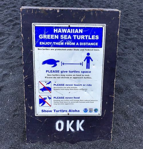 Hawaiian green sea turtles are frequent visitors to Punaluʻu black sand beach