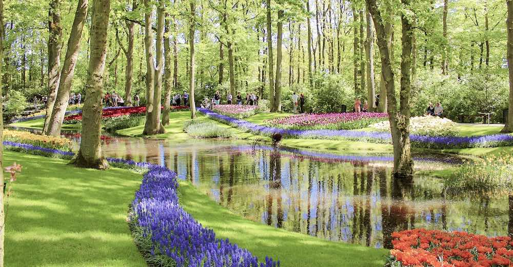 Keukenhof Gardens is home to the most famous tulip fields in the Amsterdam area