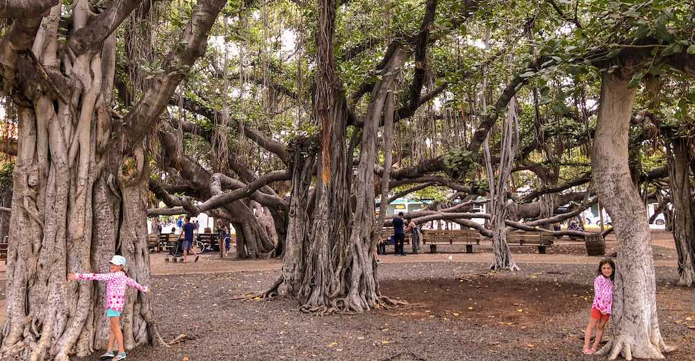 Two little treehuggers in Lahaina Banyan Court Park, a great stop in Maui with kids