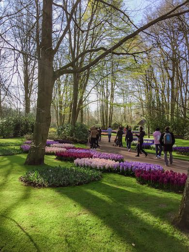 Landscaped gardens and purple and lilac flower beds at Keukenhof gardens