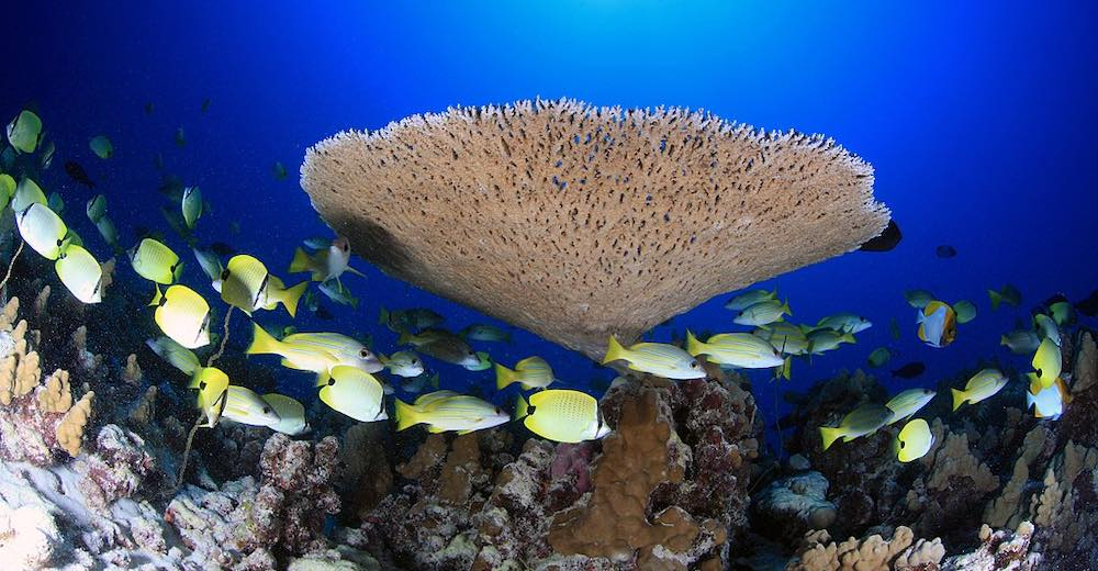 One of the most important Hawaii facts is that reef-damaging sunscreen will be banned as of 2021