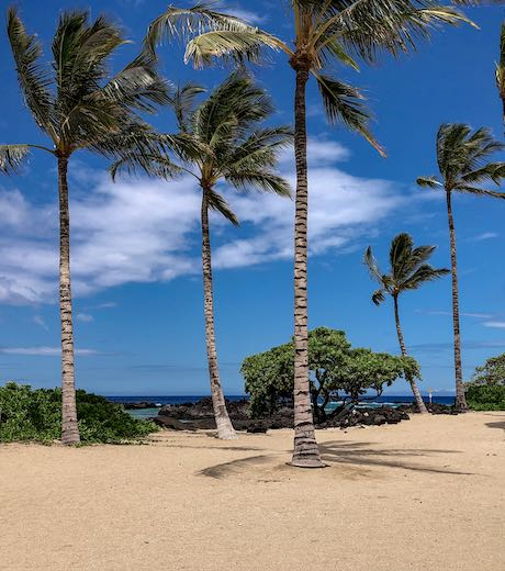 Waving palmtrees at Kika'au Point beach on Hawaii island