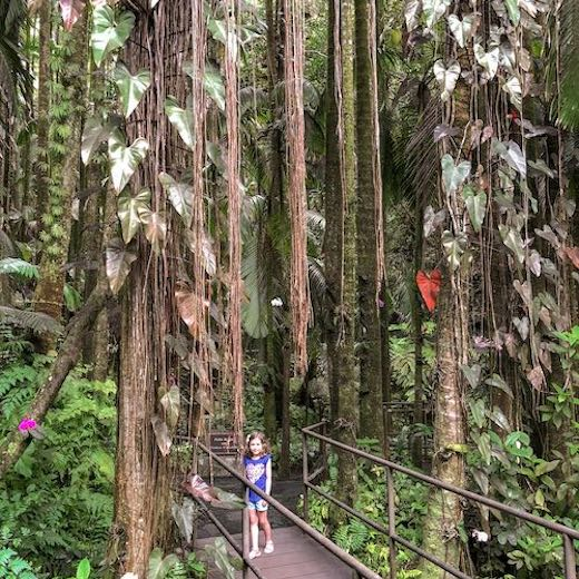 The Hilo coast on Big Island is one of the best places in Hawaii for families who love rainforest