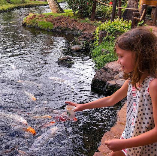 Girl feeding the koi at the Westin Maui Resort