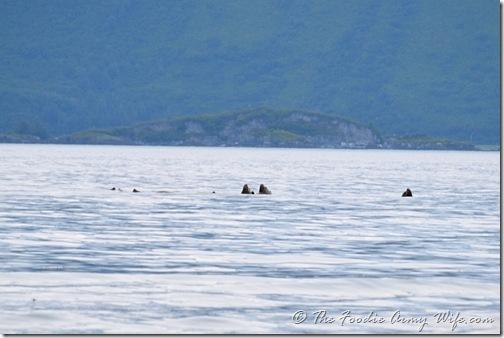 Sea Lions in Valdez, Alaska | Cosmopolitan Cornbread
