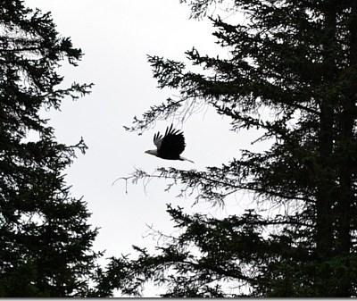 The Eagles in Valdez, Alaska