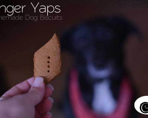 How to make Homemade Dog Biscuits for your pups! Get this easy recipe from Cosmopolitan Cornbread