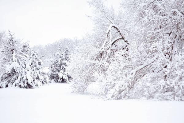Snow Day in Huntsville Alabama