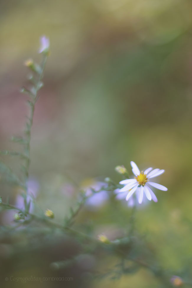 Wildflowers - a Photography post from Cosmopolitan Cornbread