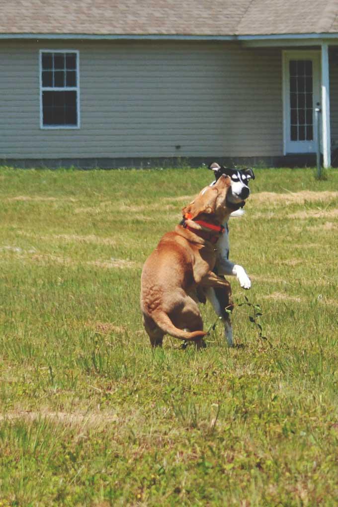 Run Doggies, Run! | Our new afternoon routine from Cosmopolitan Cornbread