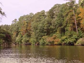Kayaking on Flint Creek in Hartselle, Alabama   Cosmopolitan Cornbread