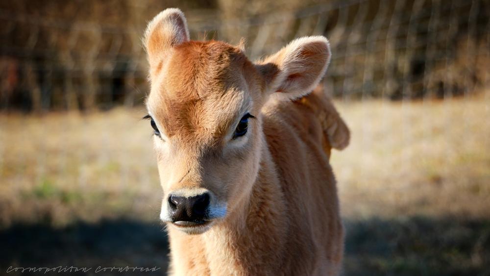 Home Grown Alabama: DSR Farms