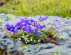 flower-2519192_1280