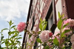 rose-2708672_1280