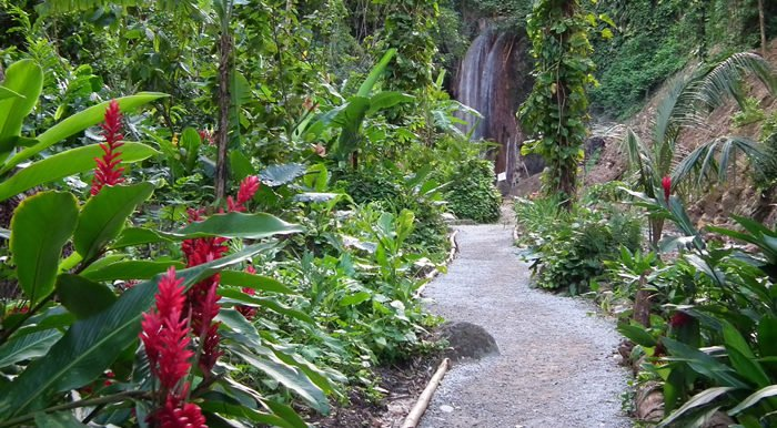 A path through the Diamond Falls Botanical gardens, showing tropical flowers and greenery and leading to a waterfall at the end