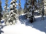 Panorama of powder in tree runs at Winter Park