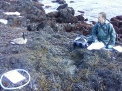 Sometimes you meet unexpected friends in the intertidal
