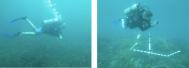 Reef research underway
