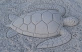 Green sea turtle – not actually an illustration, this is a sand sculpture I made on a beach (one of my more bizarre artistic hobbies)