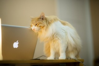 MacBook Proのネットアクセスを改善した方法