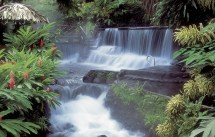 Tabacon Hot Springs Arenal Costa Rica