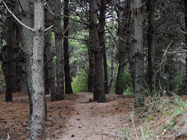 Juguemos en el Bosque