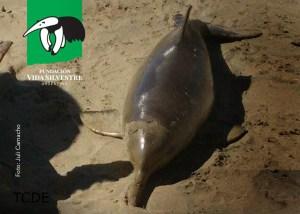delfin Franciscano