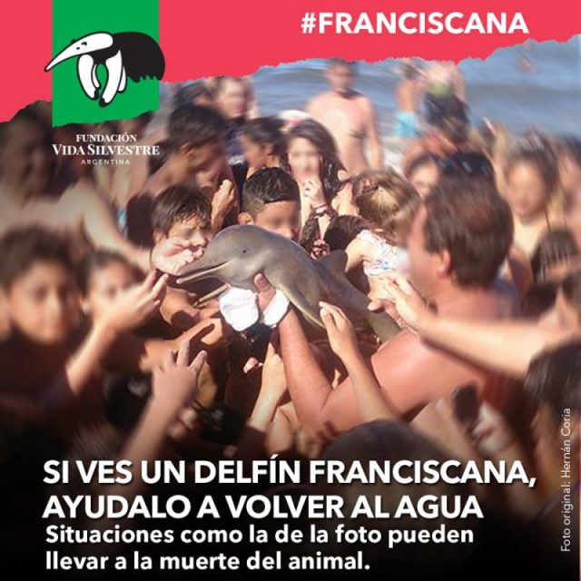 delfín Franciscana