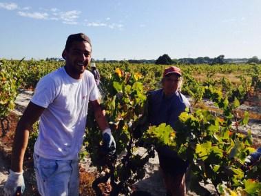 Working the Vineyard