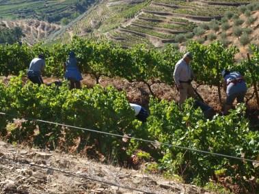 Harvesting at 6000 ft.