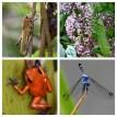Wildlife in the Rainforest