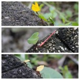 Leaf Cutter Ants Hotel Tempisque