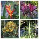 Garden Plants Costa Rica